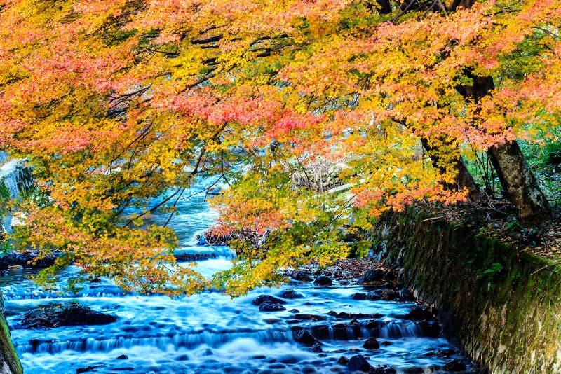 Kurama-dera foto de stock royalty free