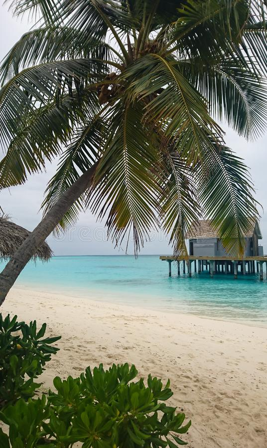 Kuramathi,马尔代夫沙滩的图象 库存照片