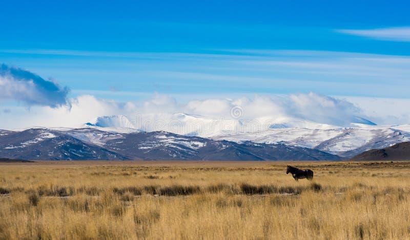 Kuray干草原的山全景 免版税库存图片