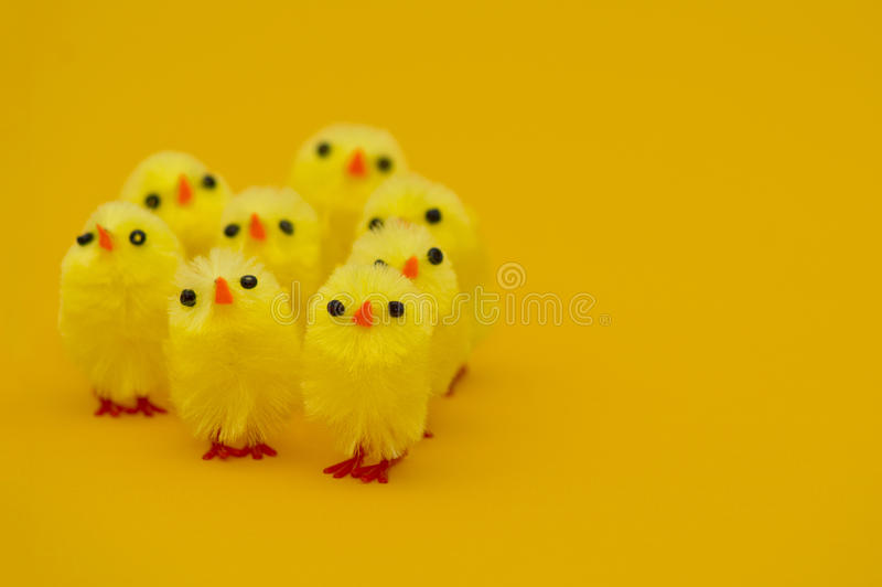 kurczątek Easter trawy odosobniony biel zdjęcia royalty free