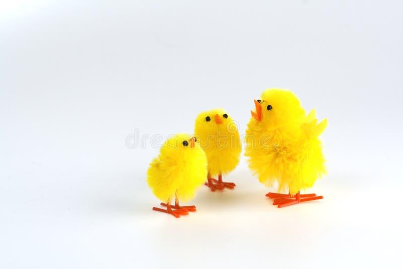 kurczątka Easter zdjęcie royalty free
