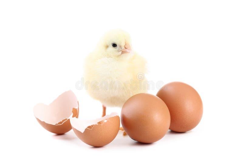 Kurczątko z jajkami fotografia stock