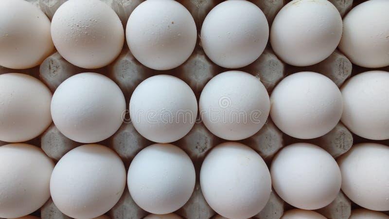 Kurczaków jajka w kartonu jajecznym pudełku odizolowywającym na białym tle Kartonowa jajeczna taca z białymi jajkami, frontowy wi ilustracji