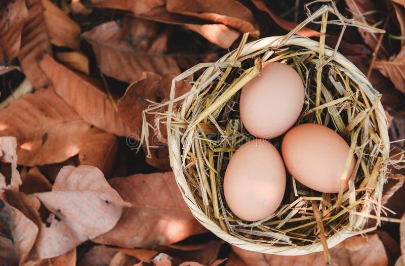 Kurczaków jajka w koszu gniazdują z suchymi jesień liśćmi zdjęcia royalty free