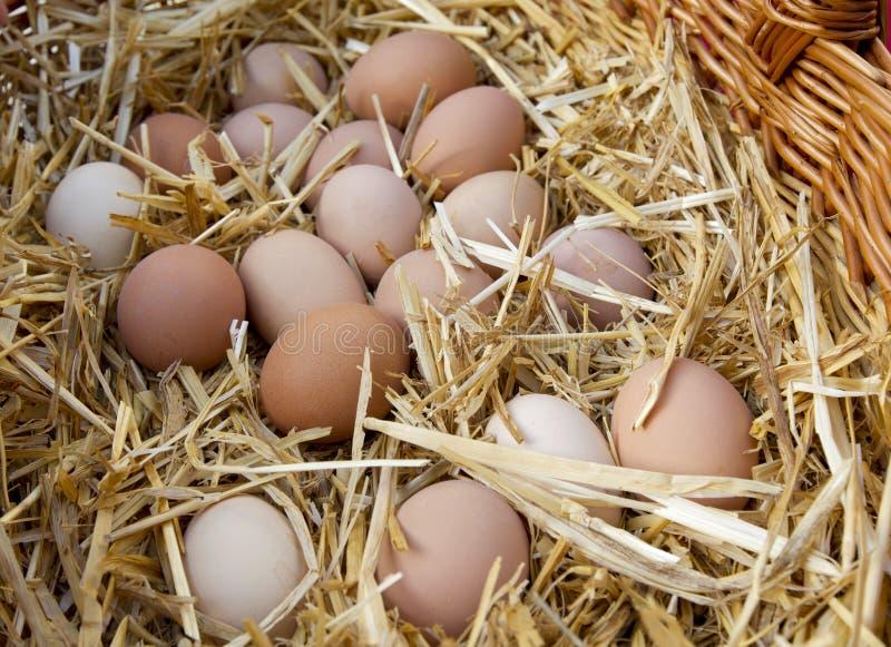 Download Kurczaków jajka zdjęcie stock. Obraz złożonej z yellow - 28963610