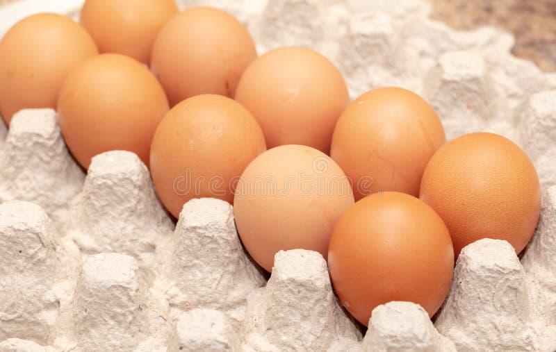 Kurczaków jajka składają w pudełku fotografia royalty free