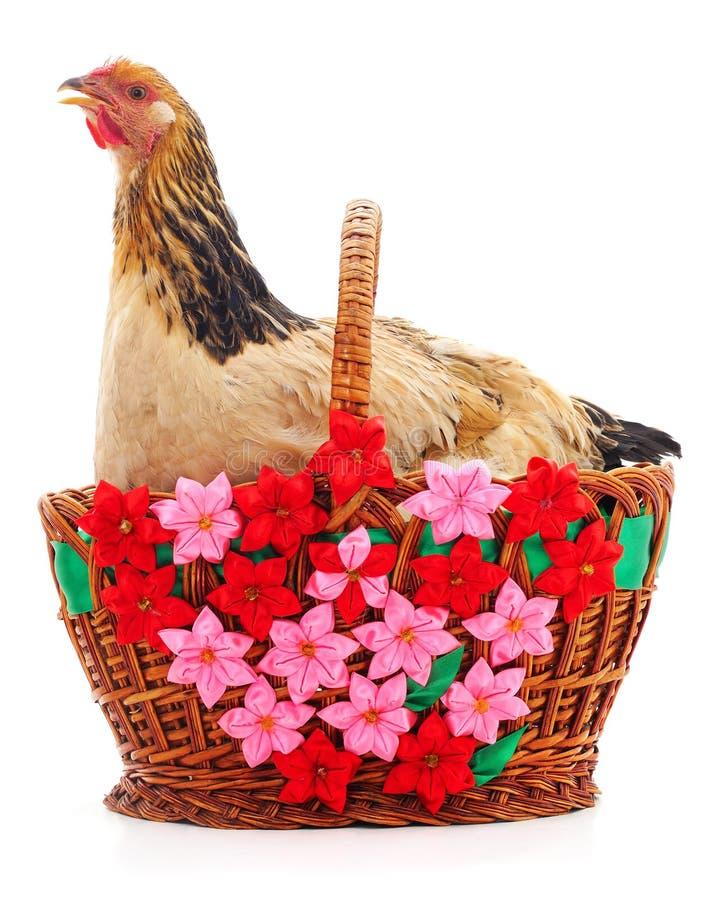 Kurczak i kosz obraz royalty free