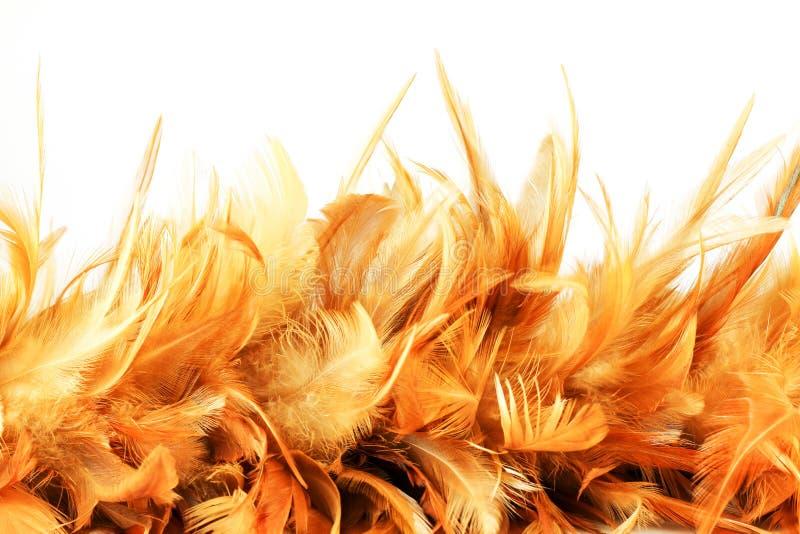 Download Kurczak piórkowa tekstura zdjęcie stock. Obraz złożonej z wzór - 57660760