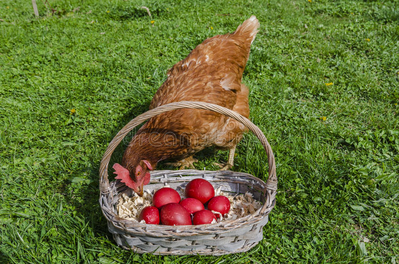 kurczaka Easter jajka obrazy royalty free