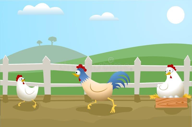 kurczaki ilustracji