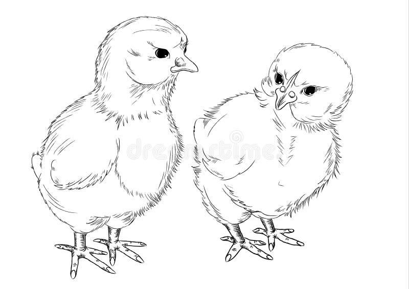 kurczaki rysuje freehand ilustracji
