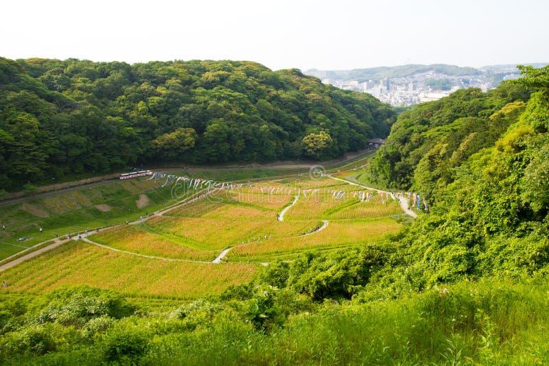 Kurihama, Yokosuka och grön skog royaltyfria bilder