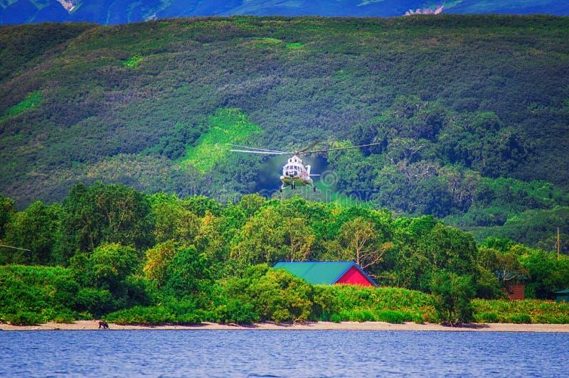 Kurile sjö kamchatka Ryssland Gräsplanfält och volcanoes trä för song för grouseförälskelsenatur wild arkivfoto