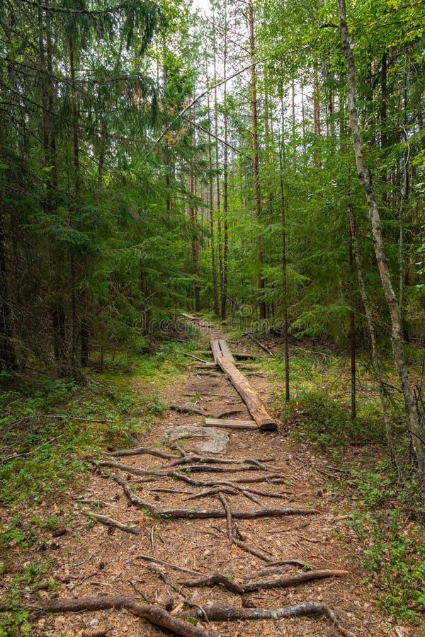 Kurjenrahka National Park. Nature trail. Green forest at summer time. Turku, Finland. Nordic natural landscape. Scandinavian. National park royalty free stock photo