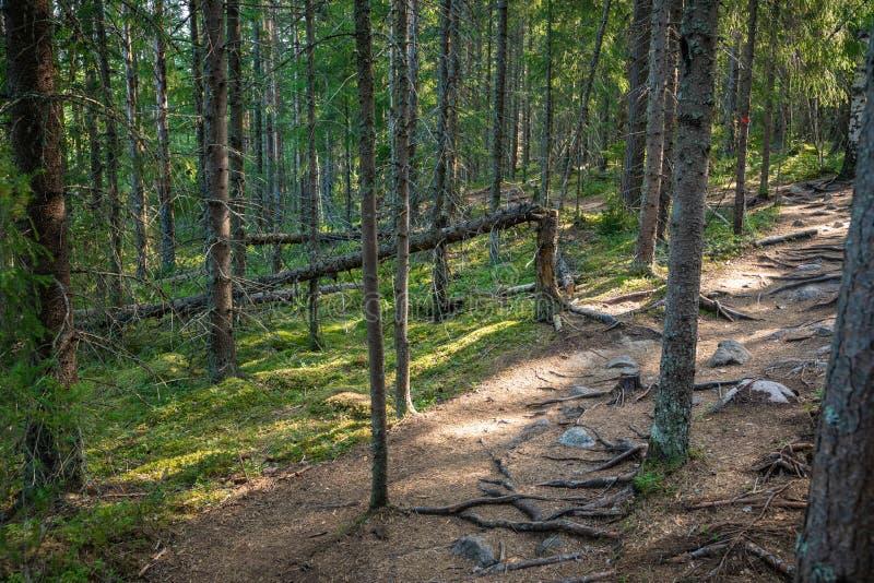 Kurjenrahka National Park. Nature trail. Green forest at summer time. Turku, Finland. Nordic natural landscape. Scandinavian. National park stock images