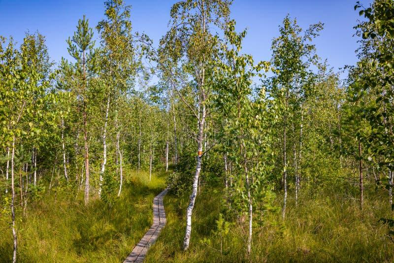 Kurjenrahka National Park. Nature trail. Green forest at summer time. Turku, Finland. Nordic natural landscape. Scandinavian. National park stock image