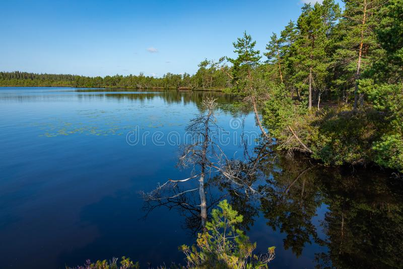 Kurjenrahka National Park. Nature trail. Green forest at summer time. Turku, Finland. Nordic natural landscape. Scandinavian. National park royalty free stock photos