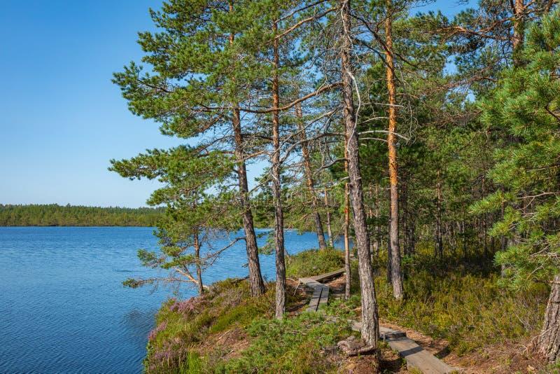 Kurjenrahka National Park. Nature trail. Green forest at summer time. Turku, Finland. Nordic natural landscape. Scandinavian. National park royalty free stock images