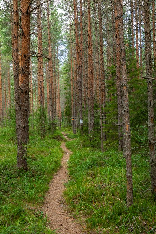Kurjenrahka National Park. Nature trail. Green forest at summer time. Turku, Finland. Nordic natural landscape. Scandinavian royalty free stock images