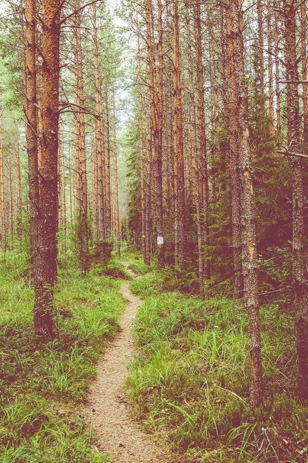 Kurjenrahka National Park. Nature trail. Green forest at summer time. Turku, Finland. Nordic natural landscape. Scandinavian royalty free stock photo