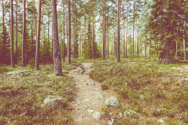 Kurjenrahka National Park. Nature trail. Green forest at summer time. Turku, Finland. Nordic natural landscape. Scandinavian stock photography