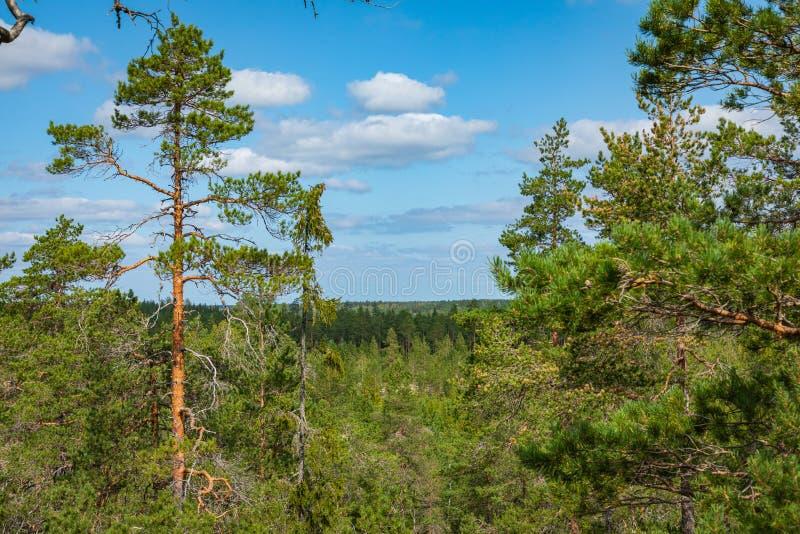 Kurjenrahka National Park. Nature trail. Green forest at summer time. Turku, Finland. Nordic natural landscape. Scandinavian stock images
