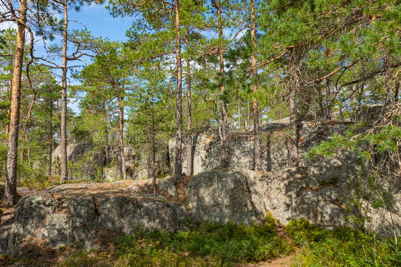 Kurjenrahka National Park. Nature trail. Green forest at summer time. Turku, Finland. Nordic natural landscape. Scandinavian. National park stock photo