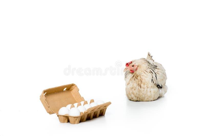 kurni i surowi jajka w jajecznym pudełku zdjęcia royalty free