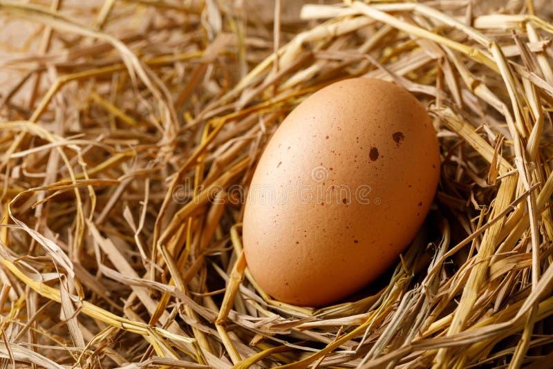 Kurny jajko na słomie obrazy stock
