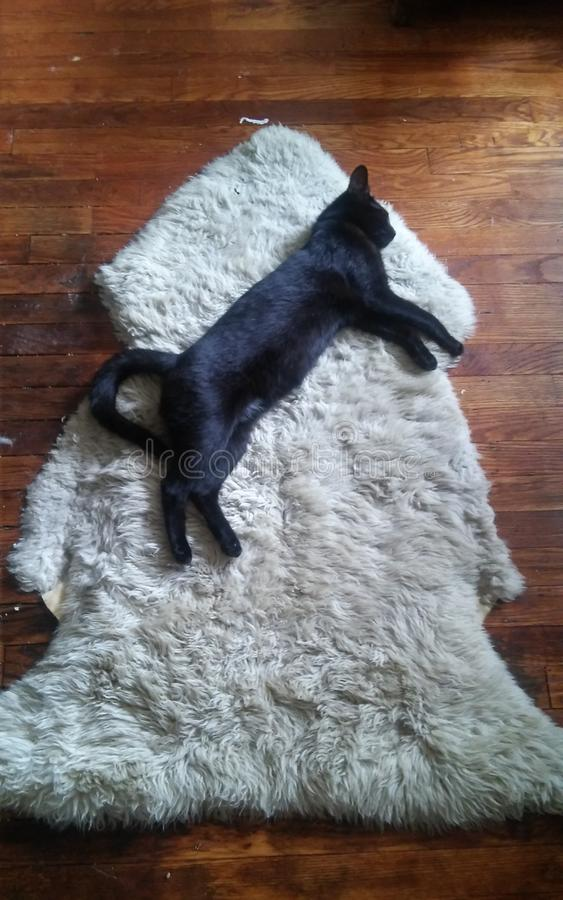 Download Kuro faisant une sieste image stock. Image du napping - 77163359