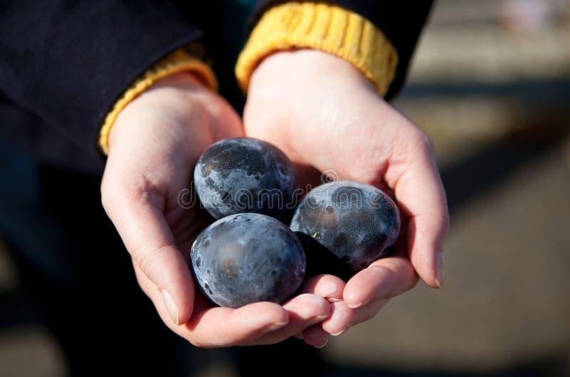 Kuro-Tamago - eieren met zwarte shell stock afbeelding