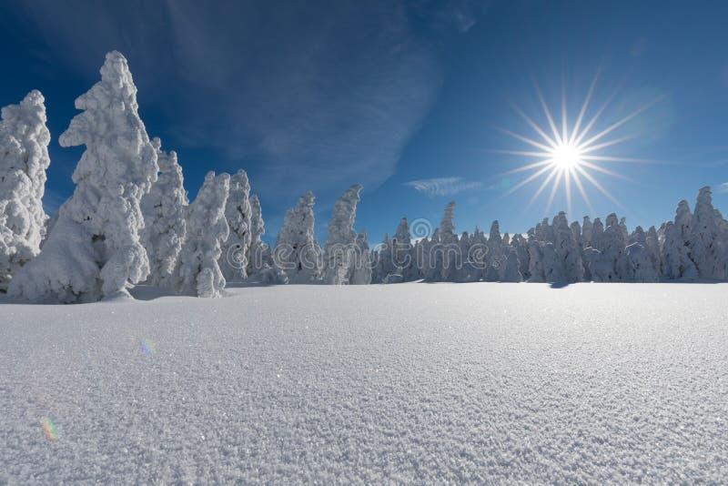 kurort wysokogórska ski Przez cały kraj narciarstwa ślad lub ślad słoneczny dzień Święta tła blisko czerwony czasu świętowanie sz fotografia stock
