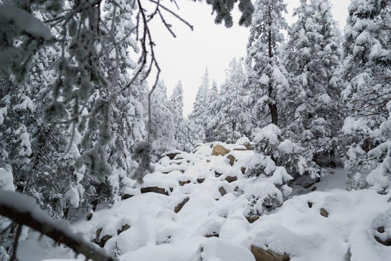 Kurumniki sous la neige dans la forêt d'hiver photographie stock