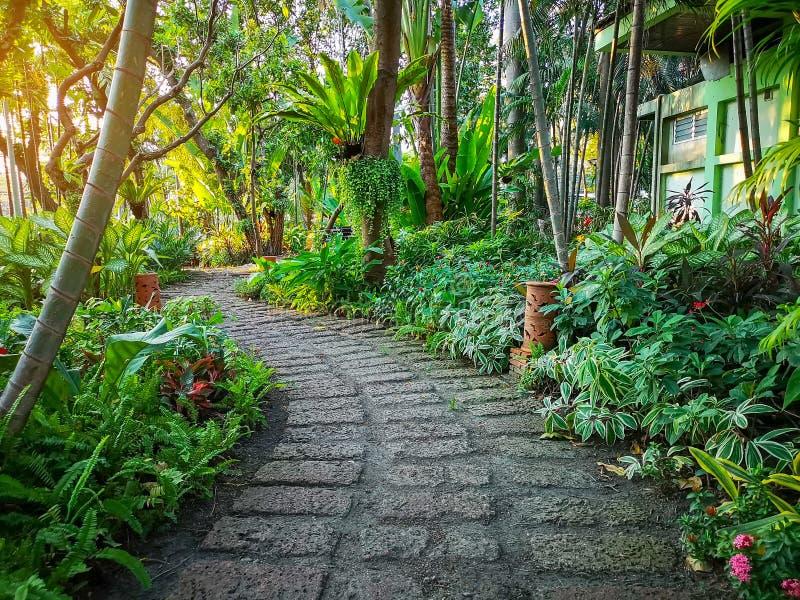 Kurvenmuster des braunen Lateritegehwegs in einem tropischen Hinterhofgarten, in einer Gr?nfarnanlage, in einem Strauch und in ei stockbild
