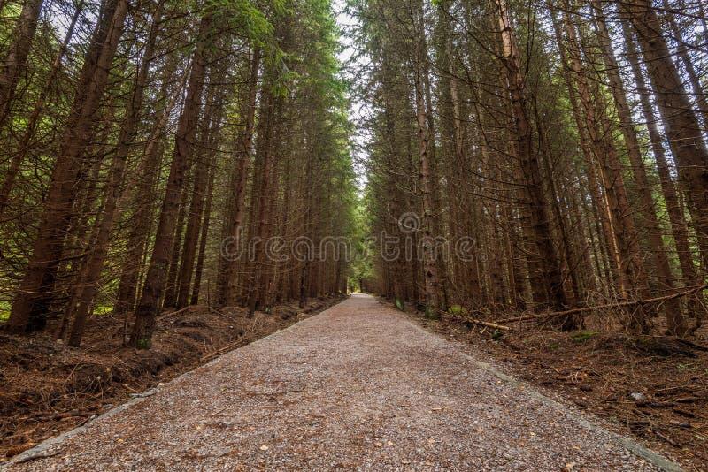Kurvenreiche Straße durch dunklen Herbstwald lizenzfreie stockfotos