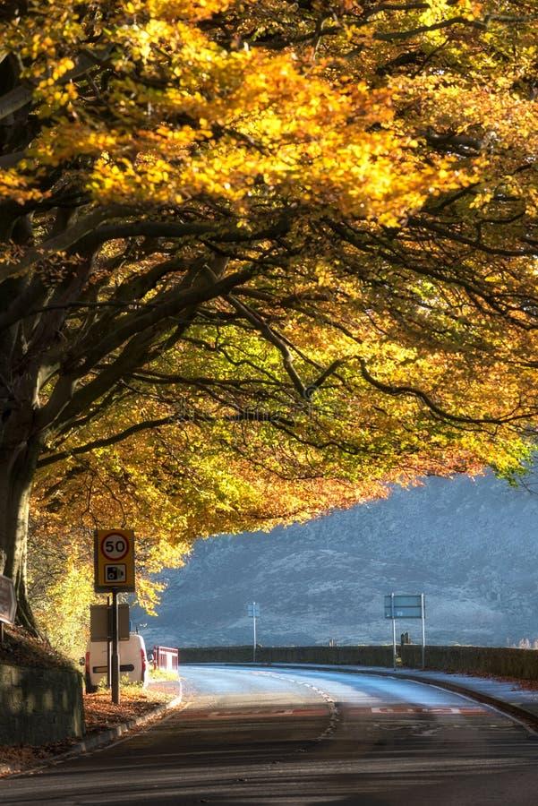 Kurvenreiche Straße durch Herbstbaum Großbritannien stockbild