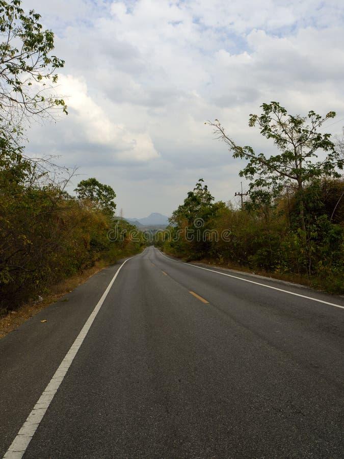 Kurvenreiche Straße in einem üppigen grünen Wald stockfotografie