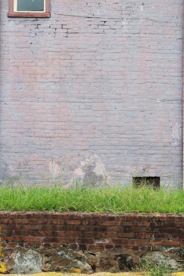 Kurze Backsteinmauer überstieg mit Gras vor Purpur gemalter Backsteinmauer lizenzfreie stockfotos
