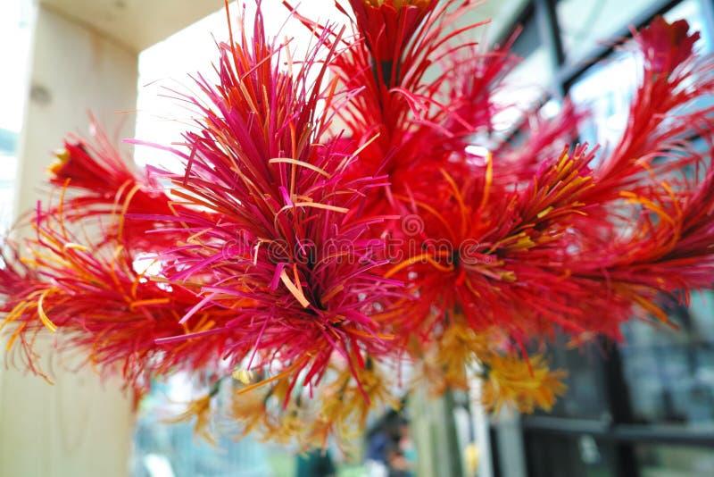 Kuskusgras-Rotblume stockfotografie