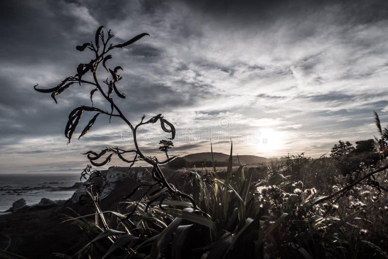 Kuslig bild av den kusliga bisarra seende växten arkivfoto