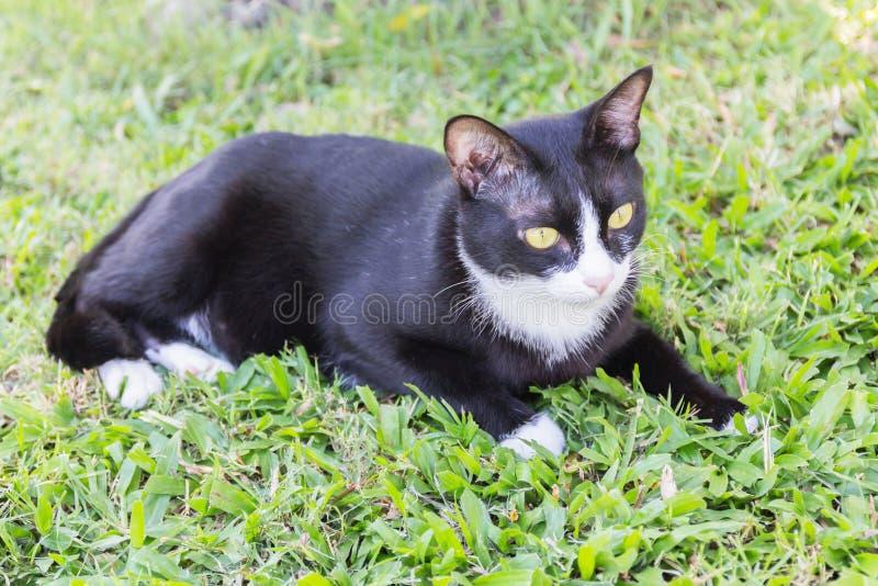 Kuslig illavarslande framsidastående för svart katt royaltyfria foton