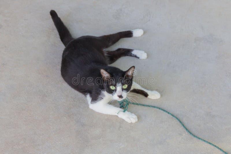 Kuslig illavarslande framsidastående för svart katt arkivbild