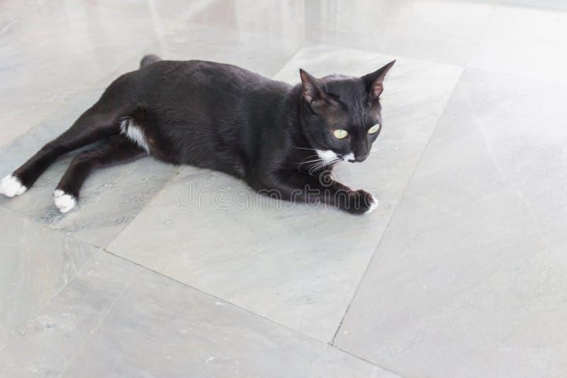 Kuslig illavarslande framsidastående för svart katt arkivbilder