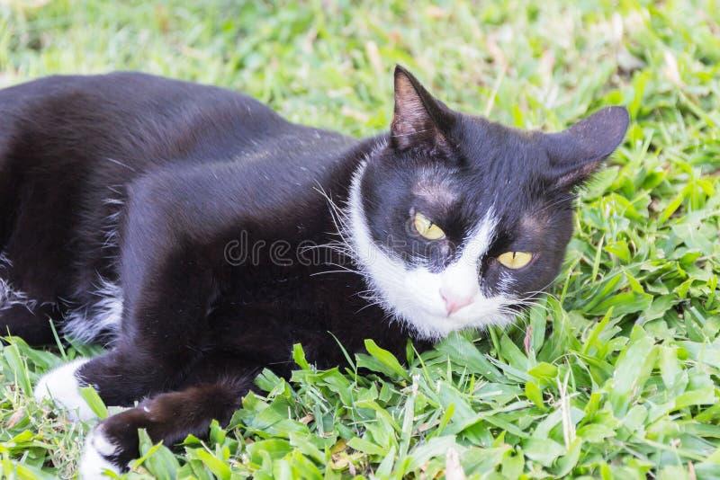 Kuslig illavarslande framsidastående för svart katt arkivfoton