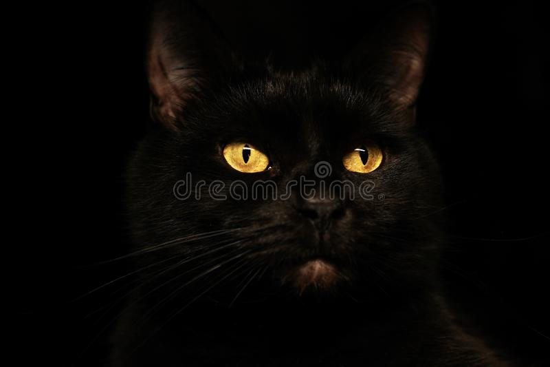 Kuslig illavarslande framsidastående för svart katt på svart bakgrund royaltyfri fotografi