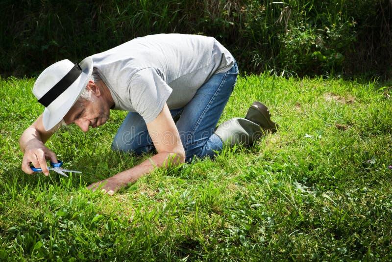 kuslig trädgårdsmästare royaltyfri bild