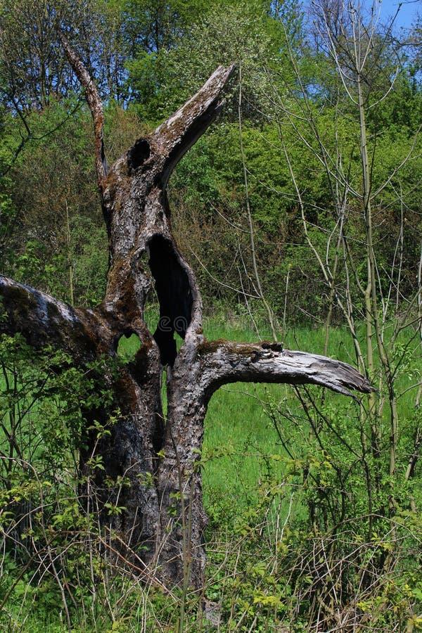 Kuslig trädstam arkivbilder