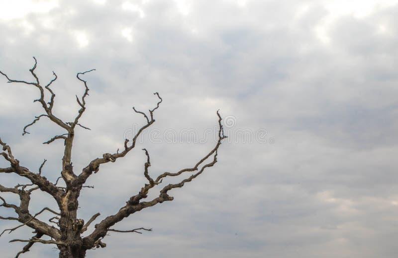 Kuslig Tree royaltyfria foton