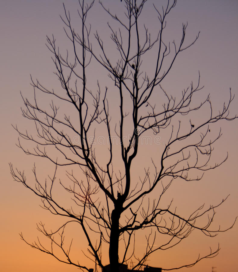 Kuslig Tree royaltyfria bilder