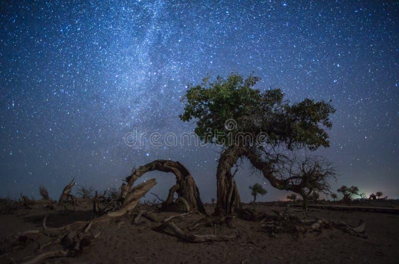 Kusligt jätte- träd under den mjölkaktiga vägen arkivfoto